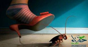 القضاء على الصراصير, التخلص من الصراصير