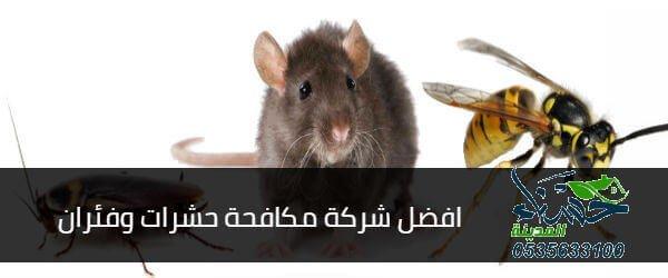 افضل شركة مكافحة حشرات وفئران, شركة مكافحة حشرات وفئران, افضل شركة مكافحة حشرات وفئران بالمدينة المنورة