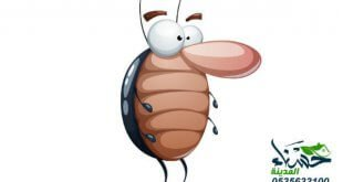 شركة مكافحة صراصير بالمدينة المنورة, مكافحة صراصير بالمدينة المنورة, مكافحة صراصير بالمدينة