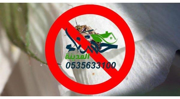 القضاء على الحشرات نهائيا - كيفية التخلص من الحشرات الزاحفة في المنزل - حشرات المنزل الصغيرة- التخلص من الحشرات المنزلية - كيف اقضي على الحشرات في البيت - حشرات المنزل الغريبة - حشرات المنزل بالصور - كيفية التخلص من الحشرات الطائرة الصغيرة